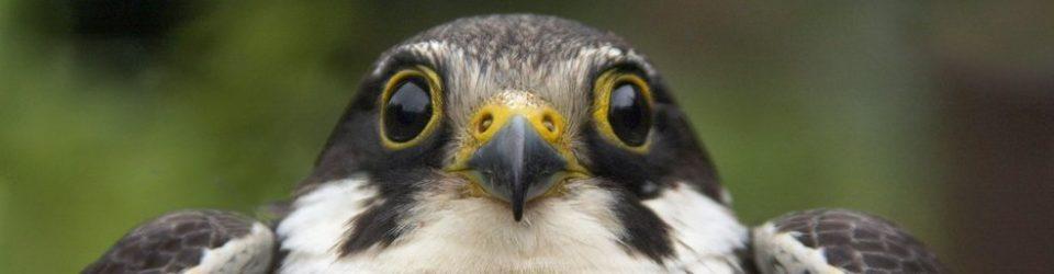 Shropshire Ornithological Society